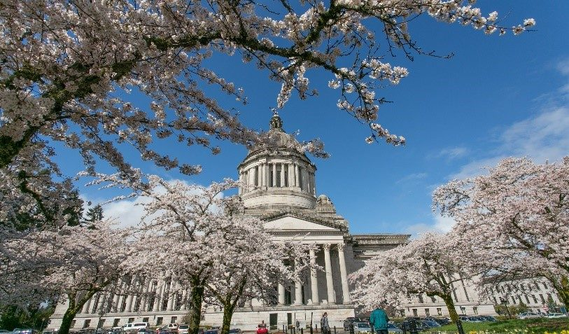 Washington State Capitol with Cherry Trees in Bloom